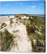 Sand Dunes Separation Canvas Print