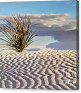 Sand Patterns And The Yucca Canvas Print