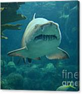 Sand Shark Canvas Print