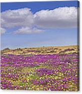 Sand Verbena On The Imperial Sand Dunes Canvas Print