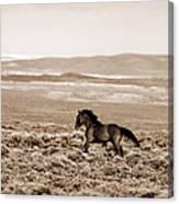 Sand Wash Mustang Canvas Print