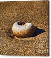 Sanded Canvas Print