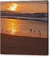 Sanderlings At Sunrise Canvas Print