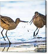 Sanderlings Playing At The Beach Canvas Print