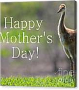 Sandhill Chick Mother's Day Card Canvas Print