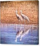 Sandhill Crane 11 Canvas Print
