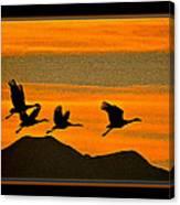 Sandhill Crane At Sunset Canvas Print
