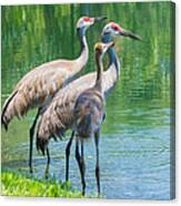 Mom Look What I Caught Canvas Print