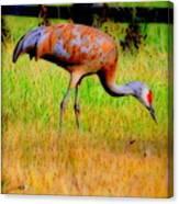 Sandhill Crane I Canvas Print