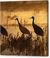 Sandhill Crane Trio At Sunrise Bosque Canvas Print