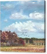 Sandhill Cranes At Crex With Birch  Canvas Print