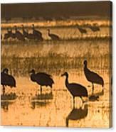 Sandhill Cranes Bosque Del Apache Nwr Canvas Print