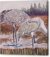 Sandhill Cranes Feeding Canvas Print