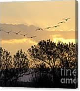 Sandhill Cranes Flying At Sunset Canvas Print