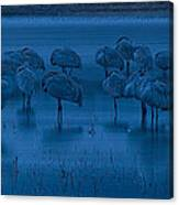 Sandhill Cranes In The Dark Bosque Del Apache Wildlife Refuge  Canvas Print