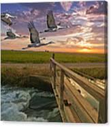 Sandhill Cranes Over Rice Fields Canvas Print