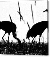 Sandhill Cranes In Silhouette Canvas Print