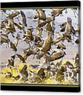 Sandhill Cranes Startled Canvas Print