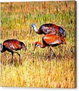 Sandhill Family Canvas Print