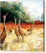 Sandhill Serenade Canvas Print