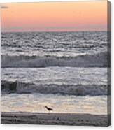 Sandpiper At Sunrise Canvas Print