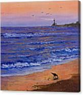Sandpiper At Sunset Canvas Print