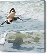 Sandpiper Flight Canvas Print