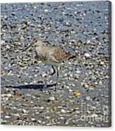 Sandpiper Galveston Is Beach Tx Canvas Print