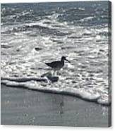 Sandpiper In The Surf Canvas Print