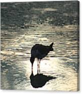 Sandpiper Reflection Canvas Print