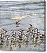 Sandpiper Reflections Canvas Print