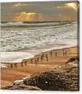 Sandpiper Sunrise Canvas Print