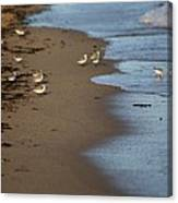 Sandpipers 2 Canvas Print