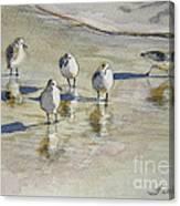Sandpipers 2 Watercolor 5-13-12 Julianne Felton Canvas Print