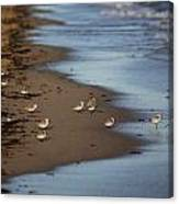 Sandpipers 3 Canvas Print