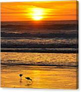 Sandpipers At Sunset Canvas Print
