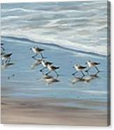 Sandpipers Canvas Print