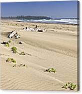 Sandy Beach On Pacific Ocean In Canada Canvas Print