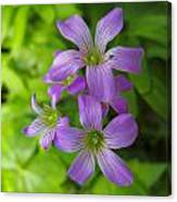 Sandy Creek Wildflowers Canvas Print