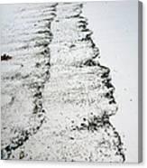 Sandy Shore Canvas Print
