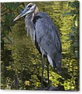 Sanibel Great Blue Heron Canvas Print