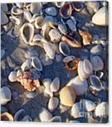 Sanibel Island Shells 1 Canvas Print