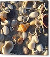 Sanibel Island Shells 2 Canvas Print