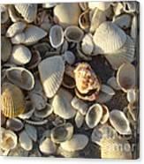 Sanibel Island Shells 3 Canvas Print