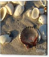 Sanibel Island Shells 5 Canvas Print