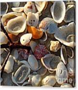 Sanibel Island Shells 6 Canvas Print