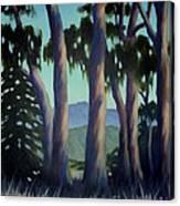 Santa Barbara Eucalyptus Grove Canvas Print