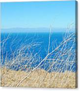 Santa Cruz Island Sea Of Grass Canvas Print