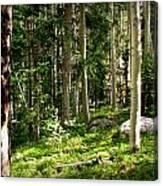 Santa Fe Aspen Woodland Forest Canvas Print
