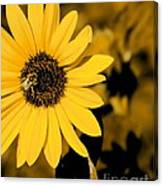 Santa Fe Sunflower 1 Canvas Print